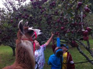 picking appels
