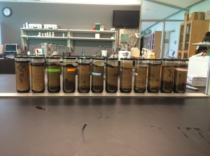 MicrobialFuelCells1